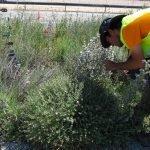 Tesis Doctoral – Vegetación perenne en taludes de carretera: Condicionantes y oportunidades