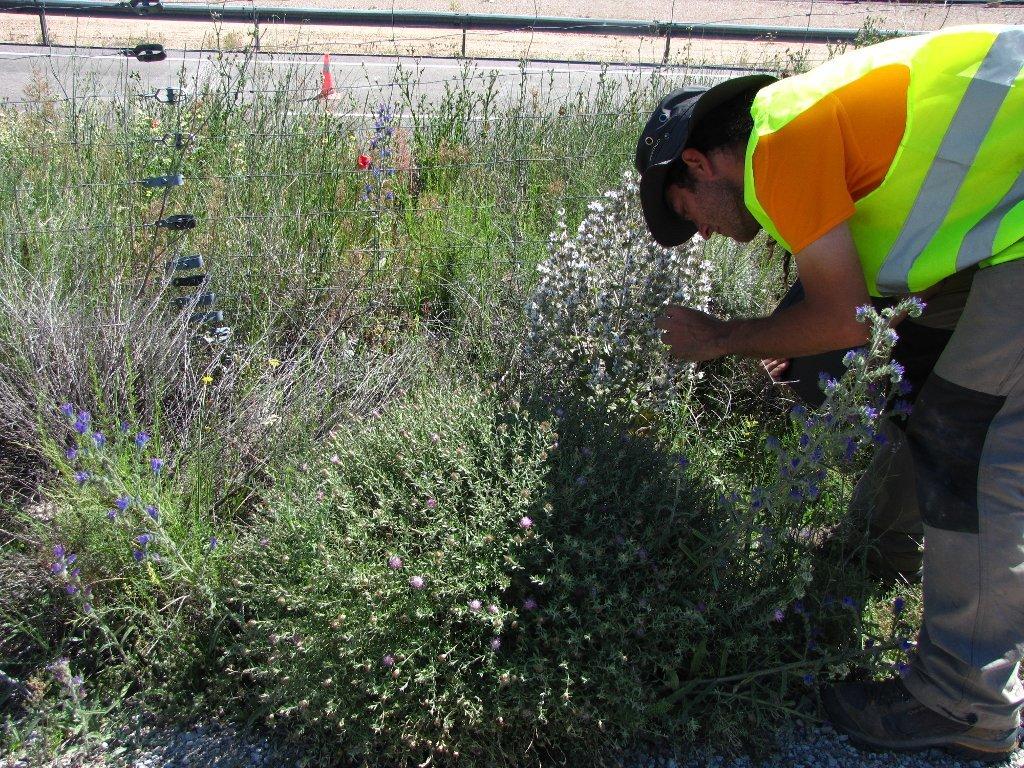 Muestreo de vegetación en el borde de una carretera para de la tesis doctoral de Juan María Arenas