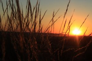 Puesta de Sol entre espigas. Foto destacada Restauración de ecosistemas