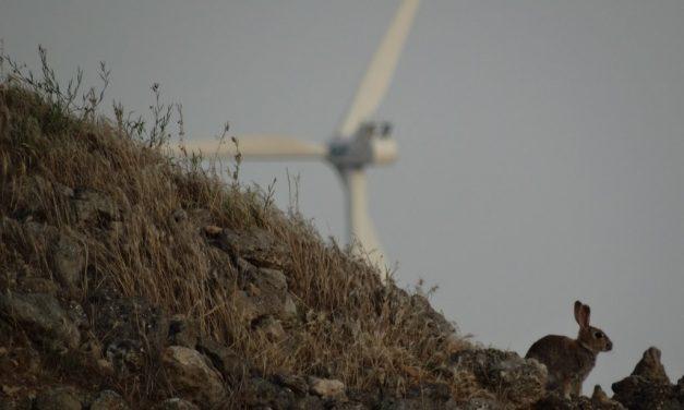 Restauración ecológica y caza menor