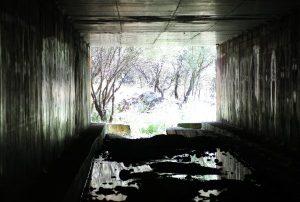 Paso de fauna en la carretera M-501 de la Comunidad de Madrid