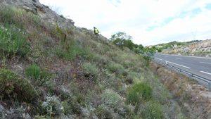Márgen de carretera (desmonte) con abundante vegetación.
