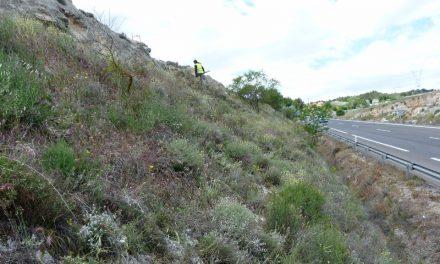 Márgenes de carretera: Una oportunidad para la conservación de la biodiversidad