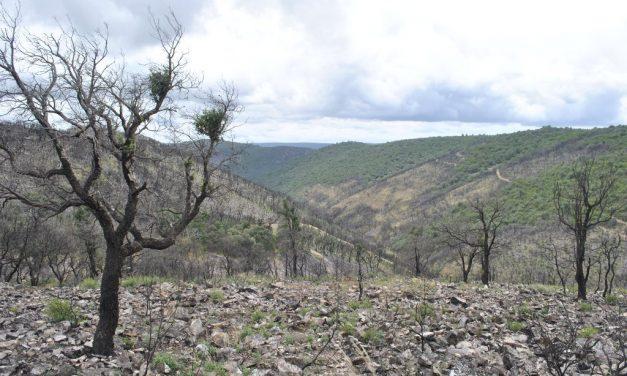 ¿Qué hacer con los bosques tras los incendios forestales?