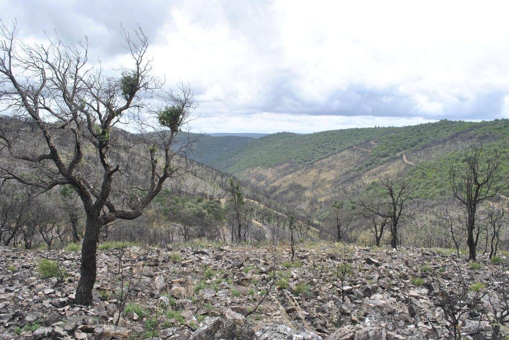 Monte o bosque tras un incendio forestal