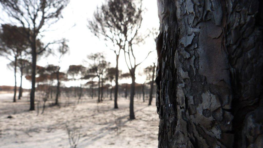 2.800.000 € para la Restauración de los incendios forestales de Huelva, Leon, Albacete y Valencia