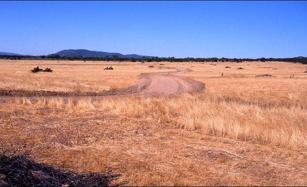 Refugios superficiales y vivares artificiales de conejo de monte del proyecto realizado entre 1992 y 2006 en la raña del Pocico de Cabañeros.