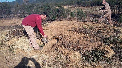 Vivar artificial para conejo de monte del proyecto Iberlince en Cabañeros.