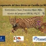 La recuperación del lince ibérico en Castilla-La Mancha: Entrevista a Juan Francisco Ruiz Alba, técnico del proyecto IBERLINCE.