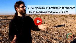 Imagen destacada del vídeo sobre reforestar en bosquetes mejor que en plantacione lineales