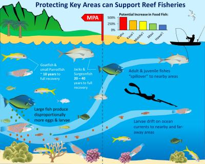 Dispersión del arrecife y los peces desde las zonas bien conservadas en Hawai