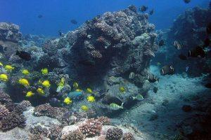Arrecife de Hawai'i con peces bien conservado