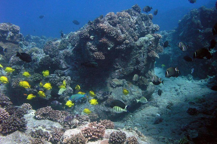 Importancia de los modelos de predicción en la restauración de poblaciones de peces en los arrecifes de  Hawai.