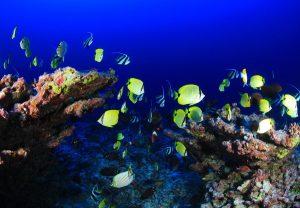 Arrecife de coral para ilustrar post sobre su papel reduciendo los daños de las inundaciones