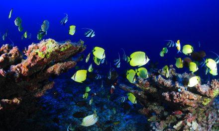 Restaurar los arrecifes de coral reduciría los daños de las inundaciones