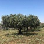 Cultivos agrícolas y biodiversidad: LIFE Food & Biodiversity