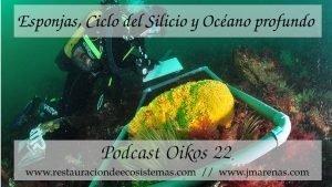 Esponjas, ciclo del Silicio y Océano Atlántico profundo en Oikos #22