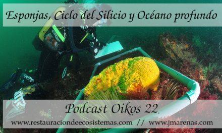 Oikos #22 | Esponjas y Ciclo del Silicio con María Lopez Acosta