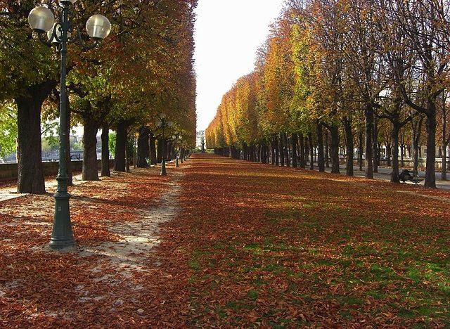 Paseo peatonal con árboles a los lados, en Francia.
