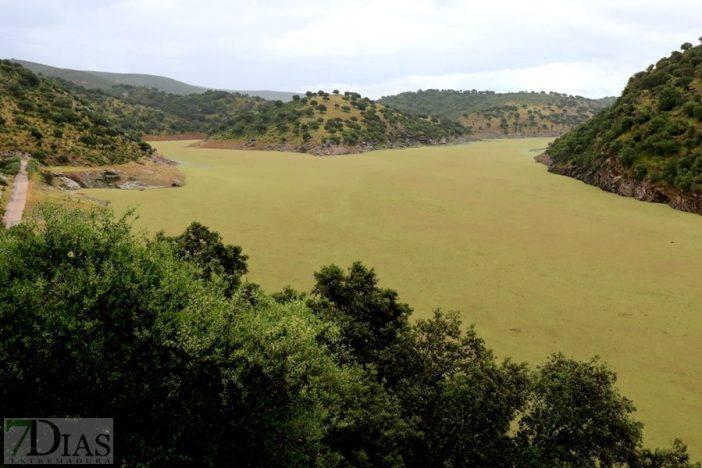 Río Tajo a la altura de Monfragüe, plagado de helechos de agua