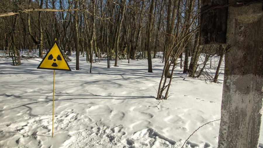 El Bosque Rojo De Chernobyl Un Bosque Radiactivo