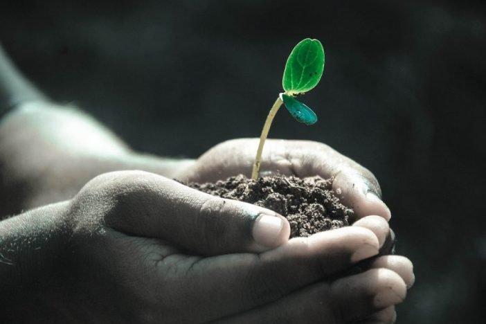Manos con tierra y semilla naciendo