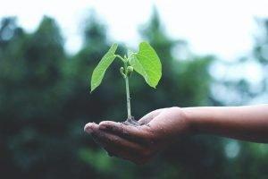 Planta sobre una mano.