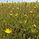Parcela de muestreo con vegetación herbácea