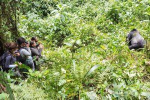 Fotografía tomada desde el Curso de Primatología en Uganda realizado por la Asocación Biomas