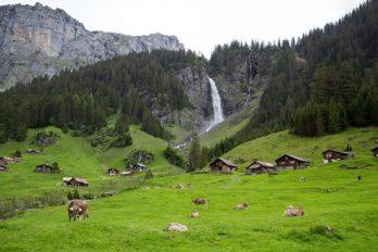 Imagen de montaña con cascada y ganado sobre un prado verde